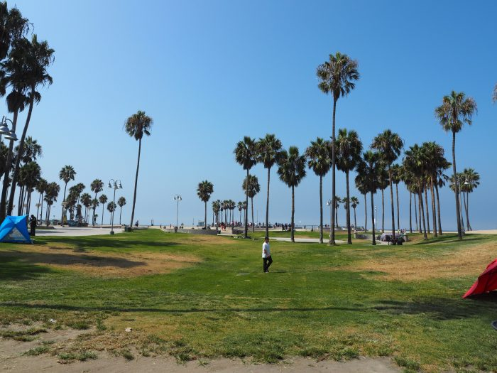 Лос Анжелес (Los Angeles). Venice Beach. Газон. Пальмы.