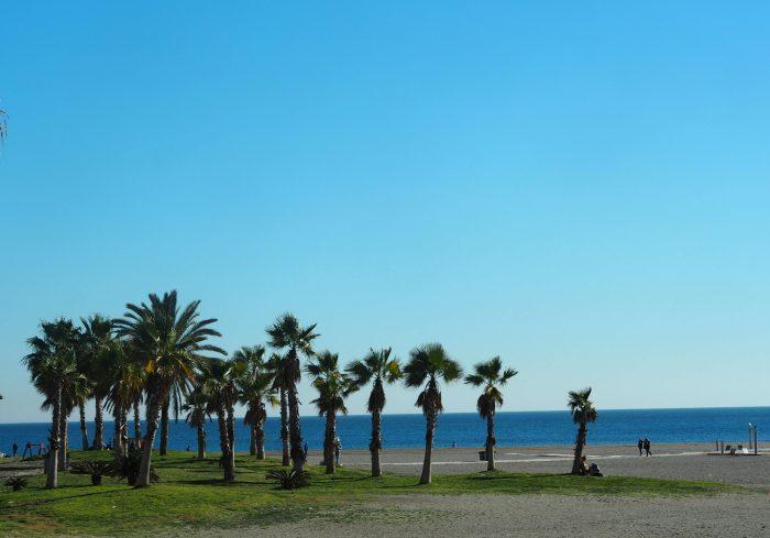 Пальмы зимой